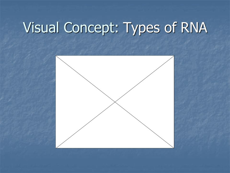 Visual Concept: Types of RNA