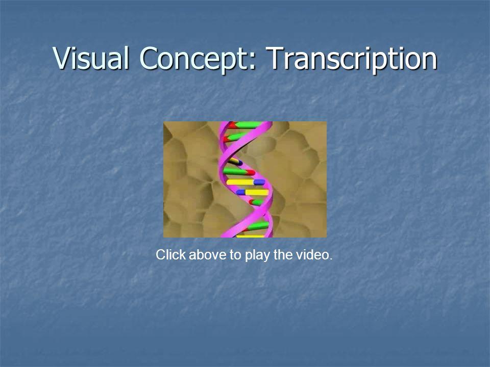 Visual Concept: Transcription