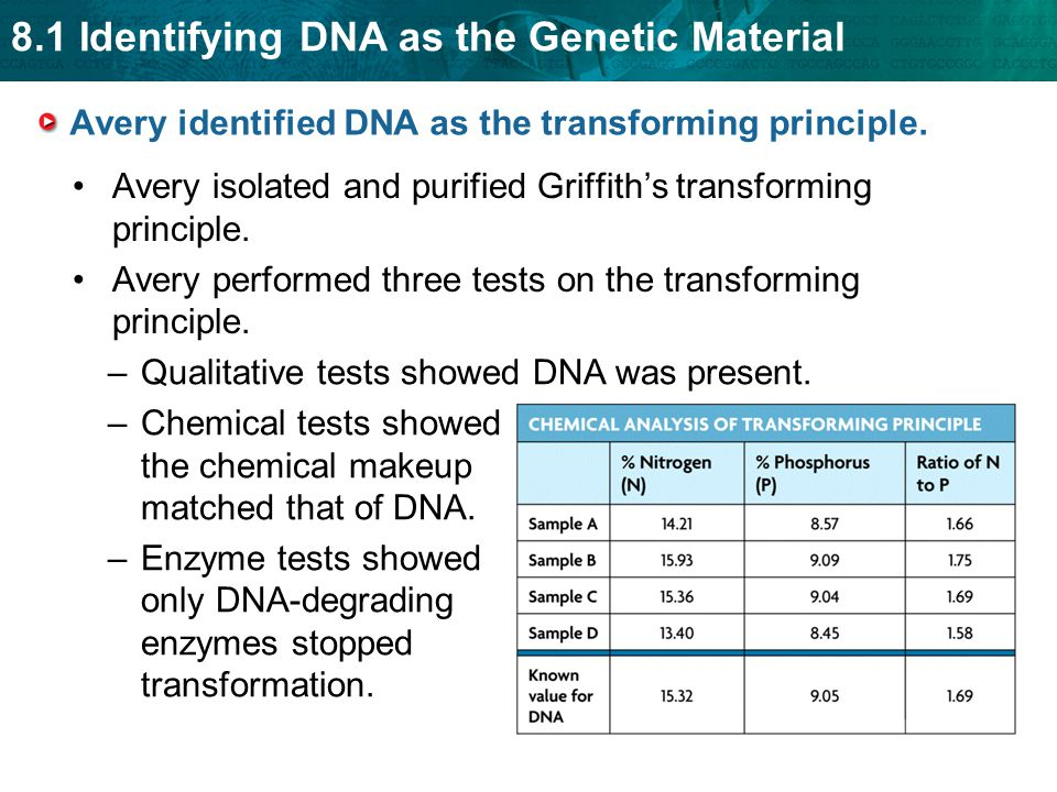 Avery identified DNA as the transforming principle.