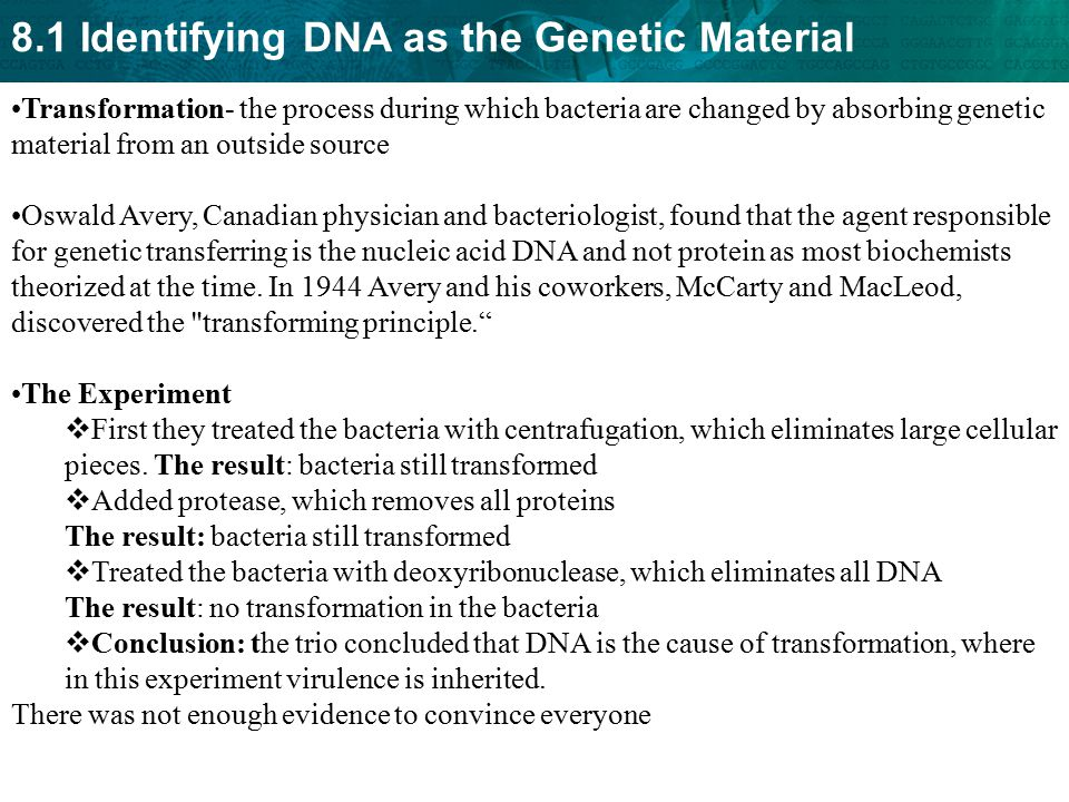 Transformation- the process during which bacteria are changed by absorbing genetic material from an outside source