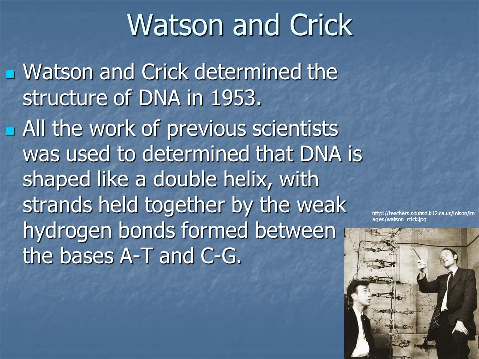 Watson and Crick Watson and Crick determined the structure of DNA in 1953.