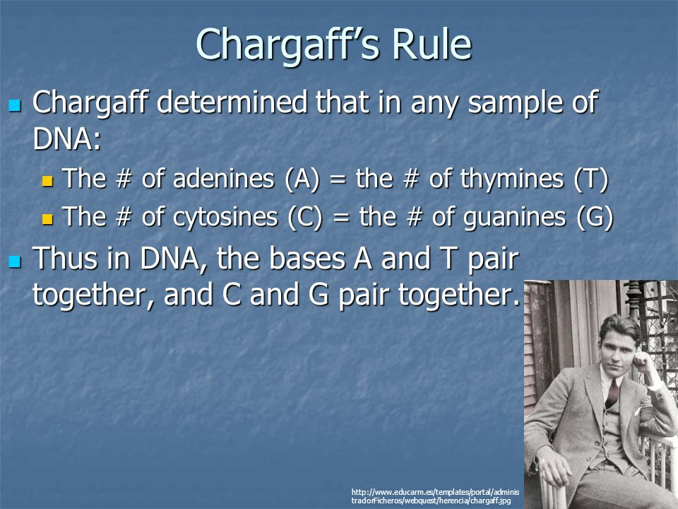 Chargaff's Rule Chargaff determined that in any sample of DNA:
