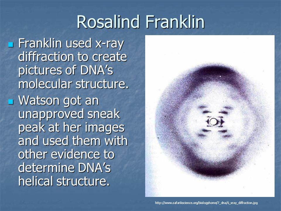 Rosalind Franklin Franklin used x-ray diffraction to create pictures of DNA's molecular structure.