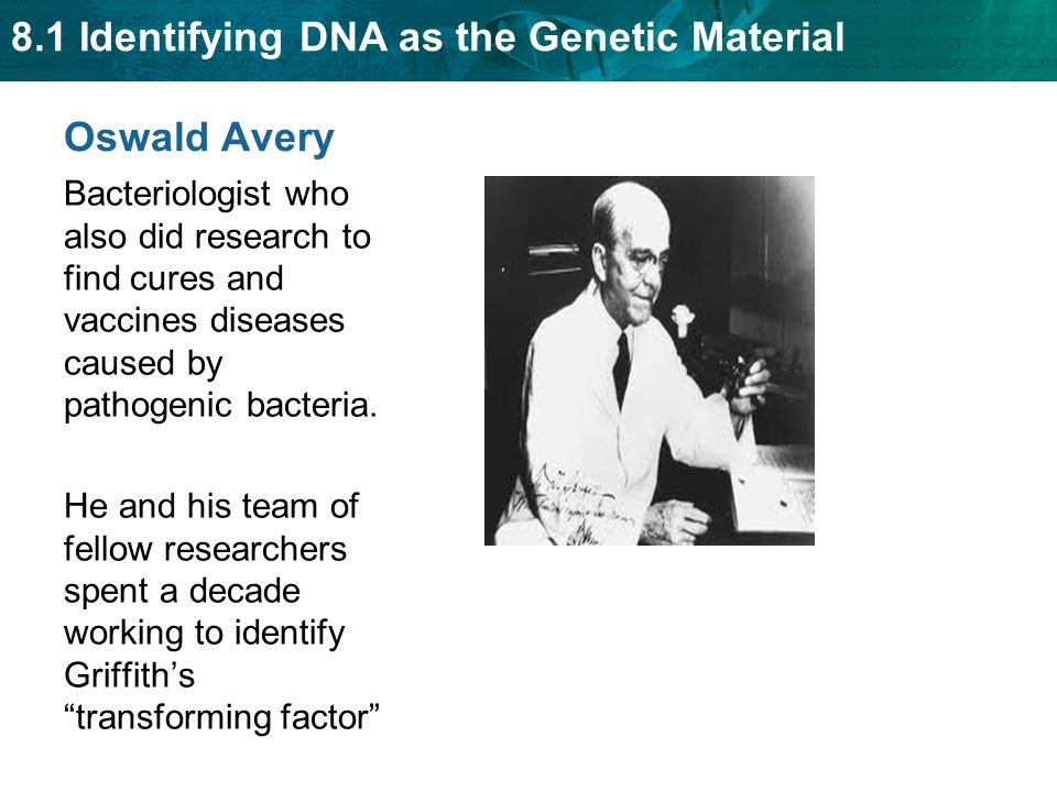 Oswald Avery Bacteriologist who also did research to find cures and vaccines diseases caused by pathogenic bacteria.