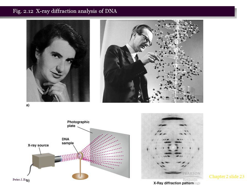 Fig. 2.12 X-ray diffraction analysis of DNA