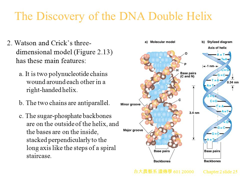 The Discovery of the DNA Double Helix