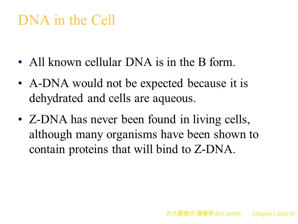 DNA in the Cell All known cellular DNA is in the B form.