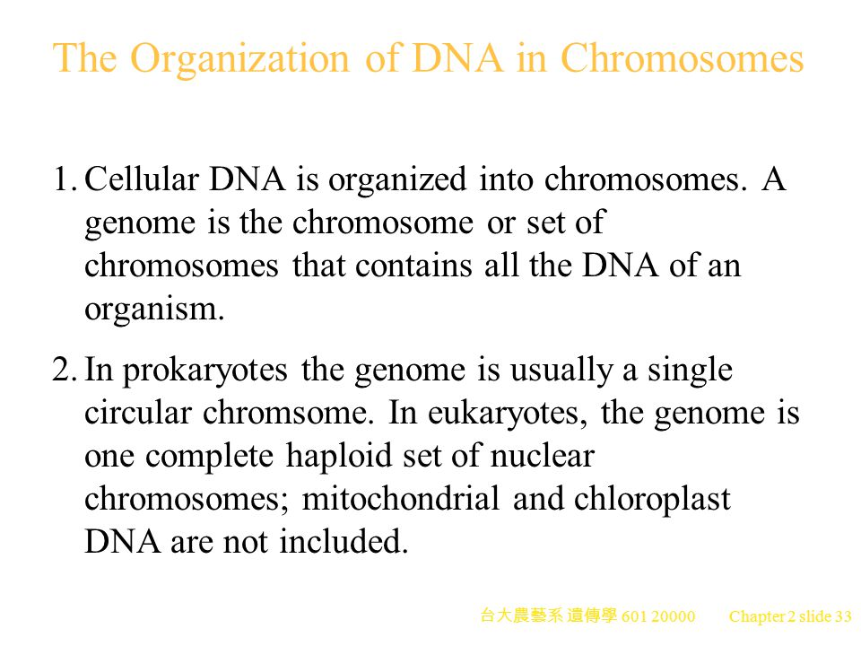 The Organization of DNA in Chromosomes