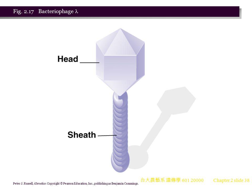 Fig. 2.17 Bacteriophage  台大農藝系 遺傳學 601 20000
