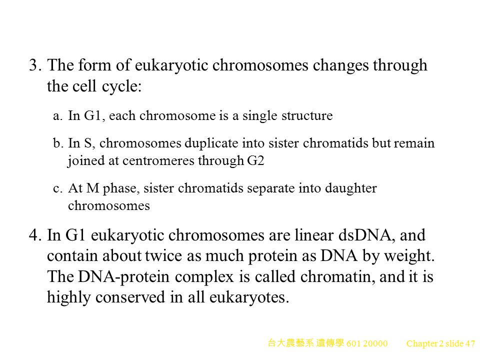 3. The form of eukaryotic chromosomes changes through the cell cycle: