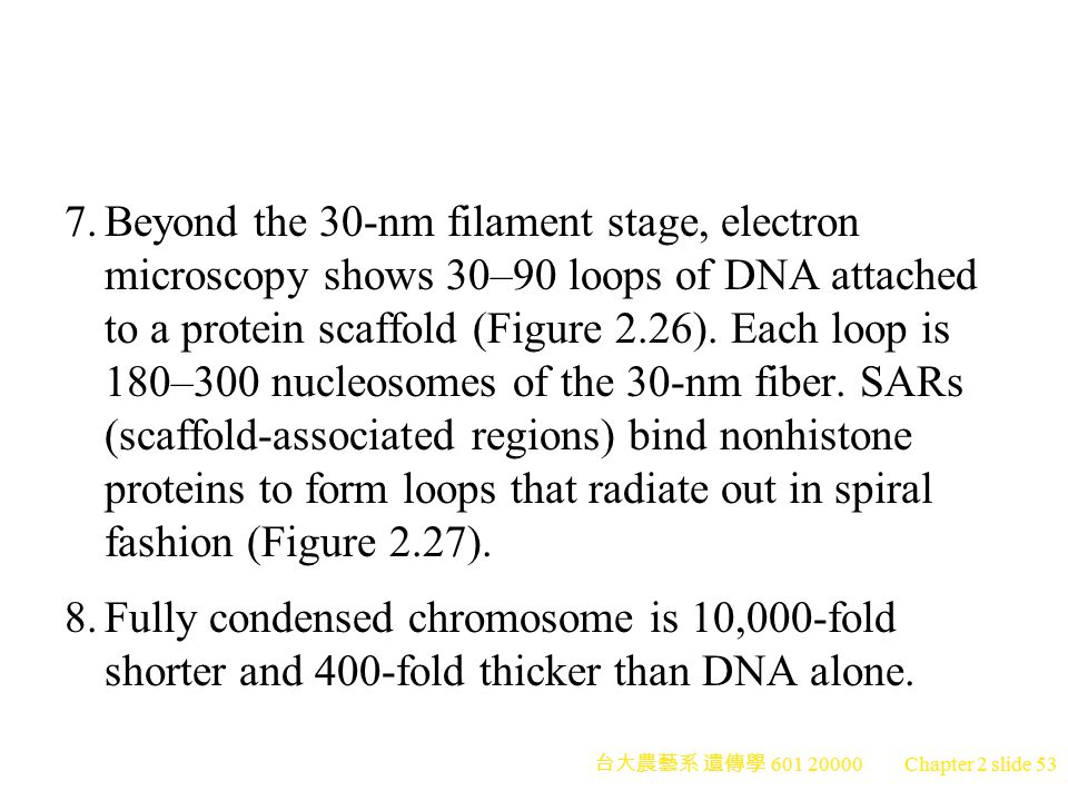7. Beyond the 30-nm filament stage, electron microscopy shows 30–90 loops of DNA attached to a protein scaffold (Figure 2.26). Each loop is 180–300 nucleosomes of the 30-nm fiber. SARs (scaffold-associated regions) bind nonhistone proteins to form loops that radiate out in spiral fashion (Figure 2.27).