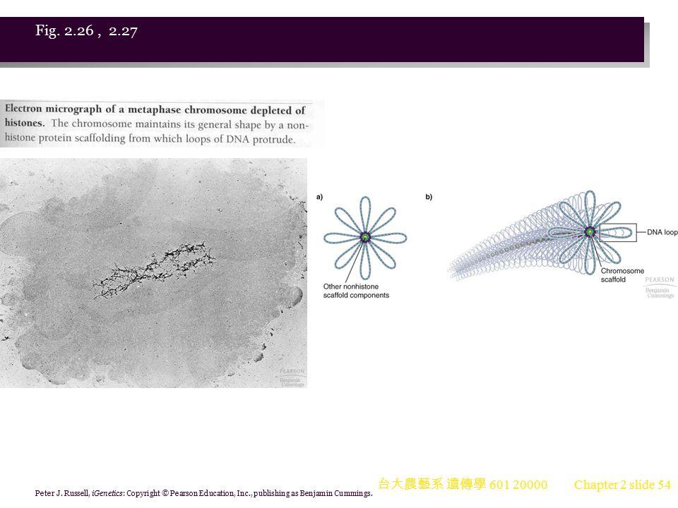 Fig. 2.26 , 2.27 台大農藝系 遺傳學 601 20000. Peter J.
