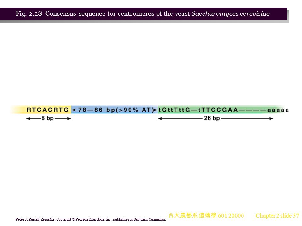 Fig. 2.28 Consensus sequence for centromeres of the yeast Saccharomyces cerevisiae