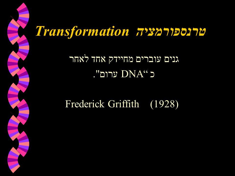 Transformation טרנספורמציה