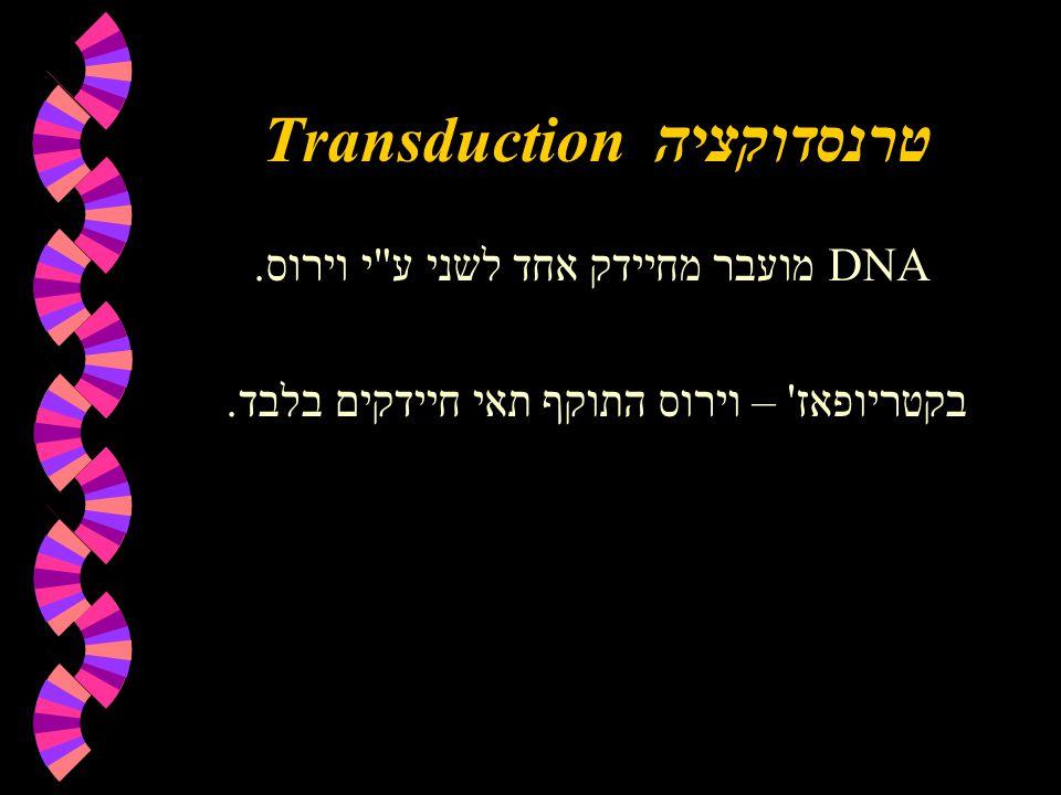 Transductionטרנסדוקציה