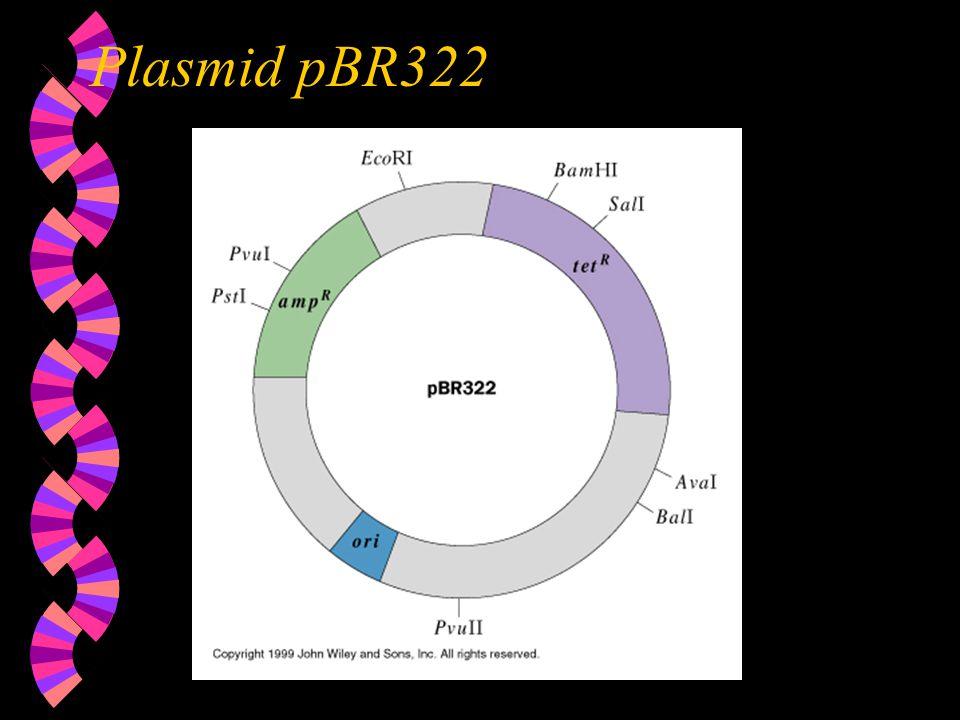 Plasmid pBR322