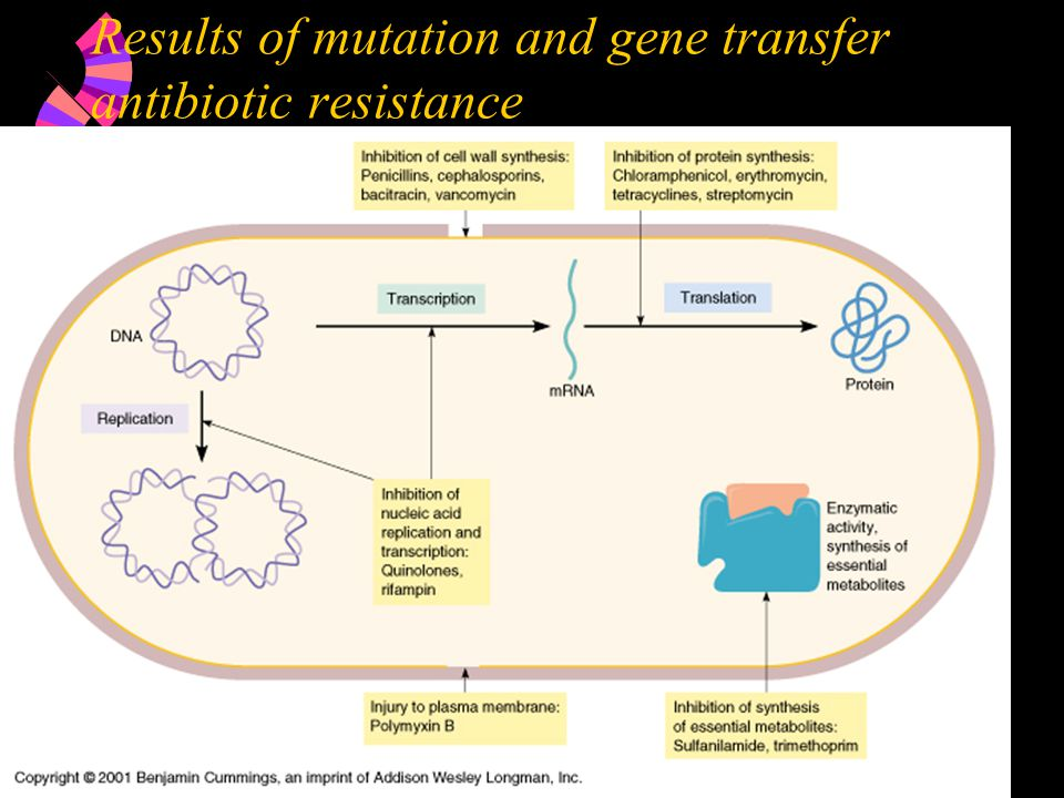 Results of mutation and gene transfer antibiotic resistance