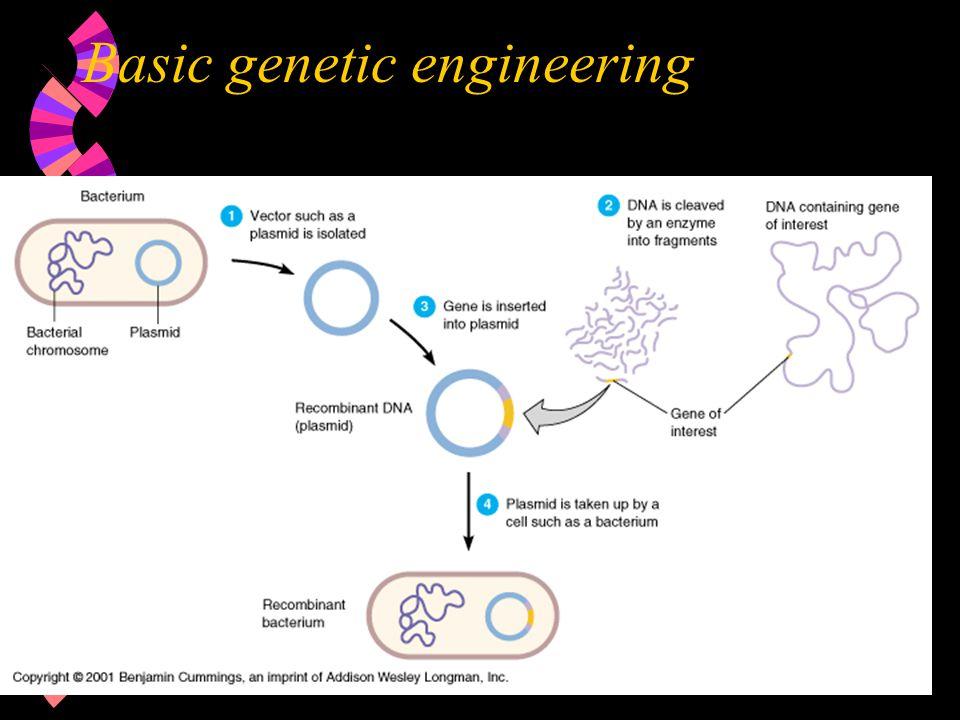 Basic genetic engineering