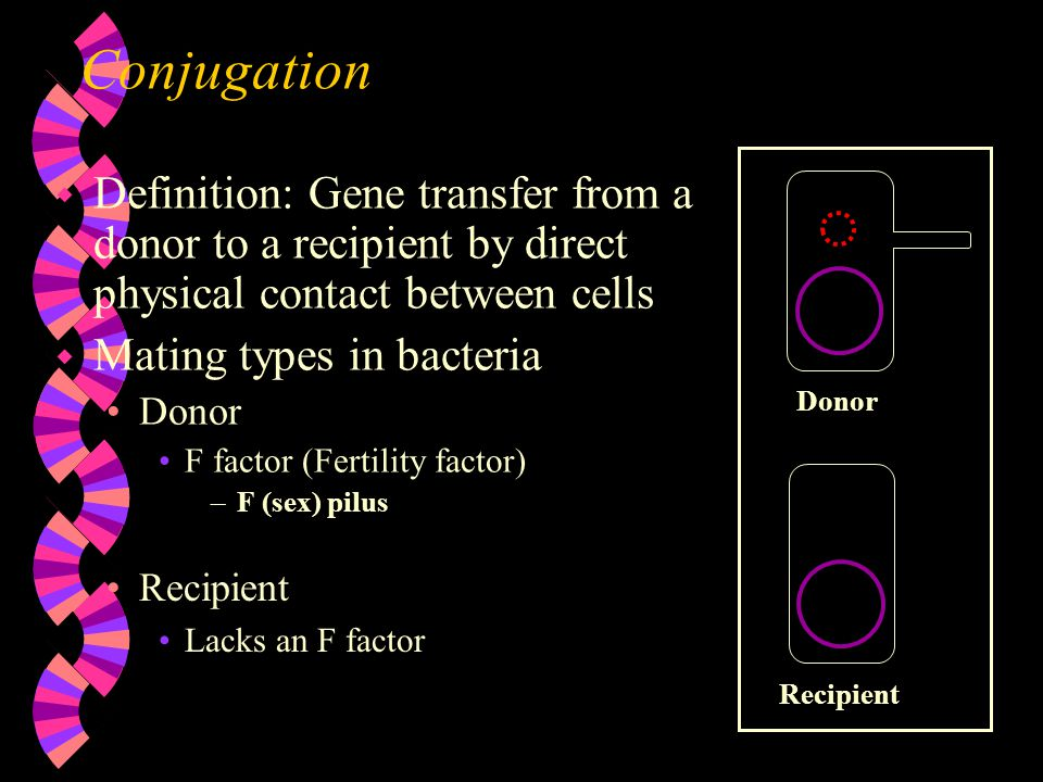 Conjugation Donor. Definition: Gene transfer from a donor to a recipient by direct physical contact between cells.