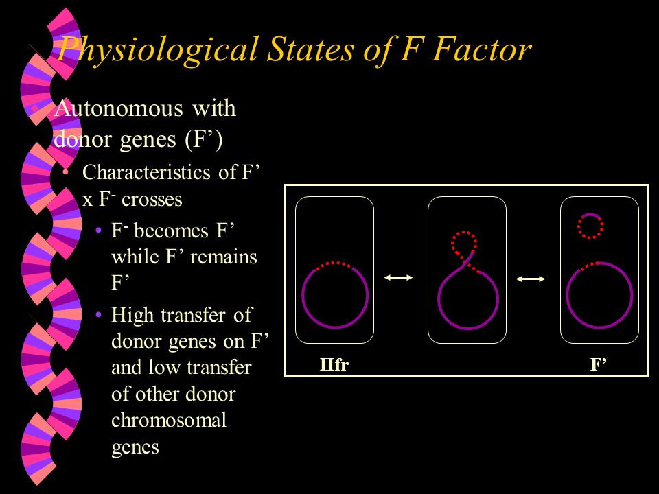Physiological States of F Factor