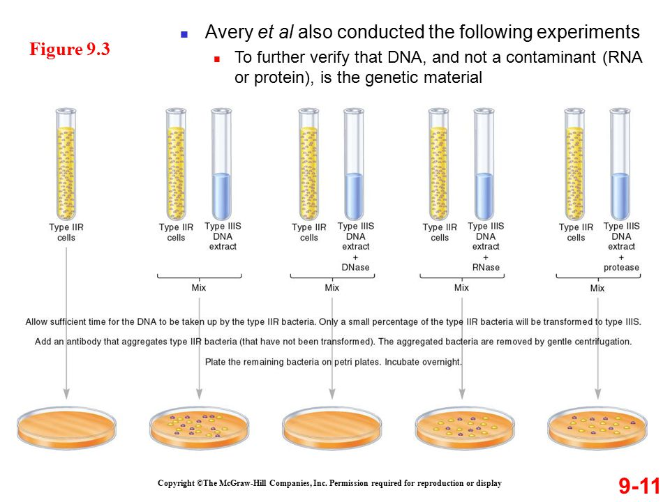 9-11 Avery et al also conducted the following experiments Figure 9.3