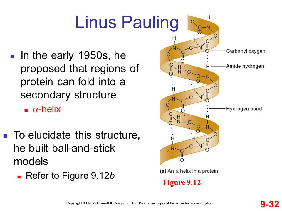 Linus Pauling In the early 1950s, he proposed that regions of protein can fold into a secondary structure.