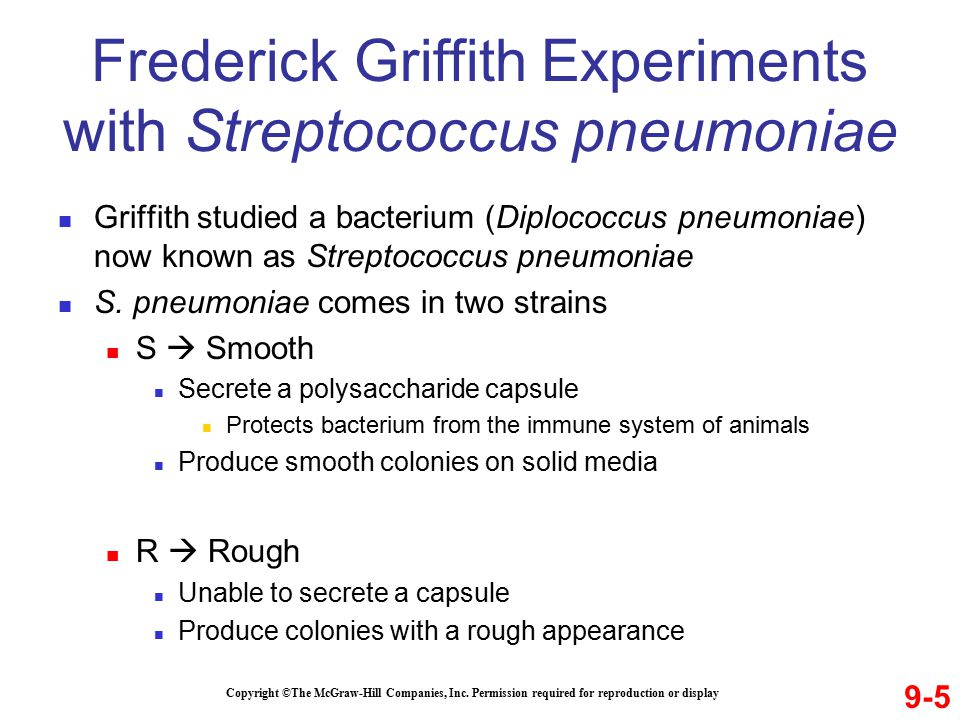 Frederick Griffith Experiments with Streptococcus pneumoniae