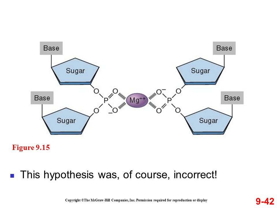 This hypothesis was, of course, incorrect!