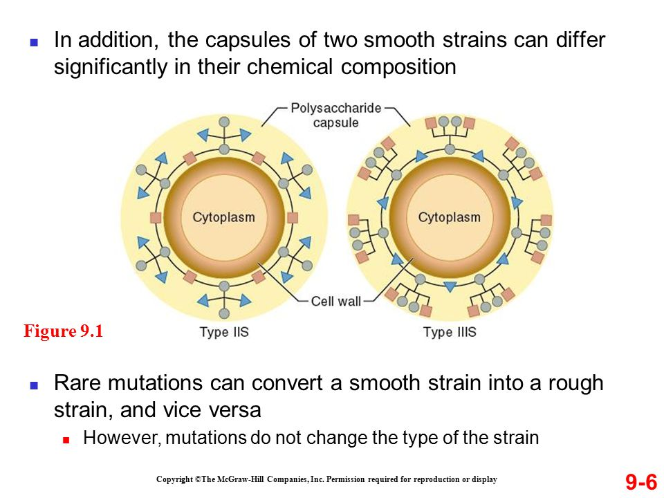 In addition, the capsules of two smooth strains can differ significantly in their chemical composition