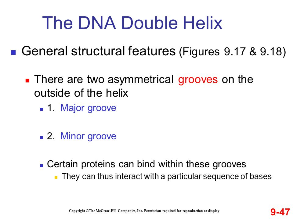 The DNA Double Helix General structural features (Figures 9.17 & 9.18)