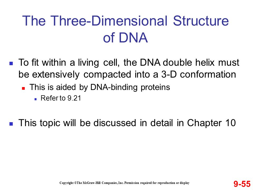 The Three-Dimensional Structure of DNA