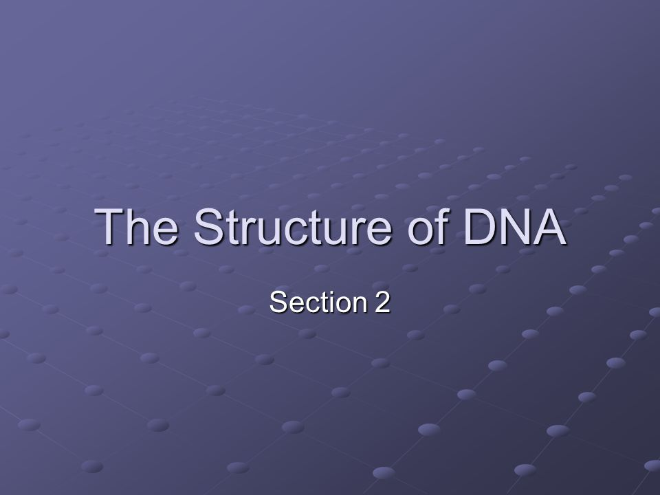 The Structure of DNA Section 2