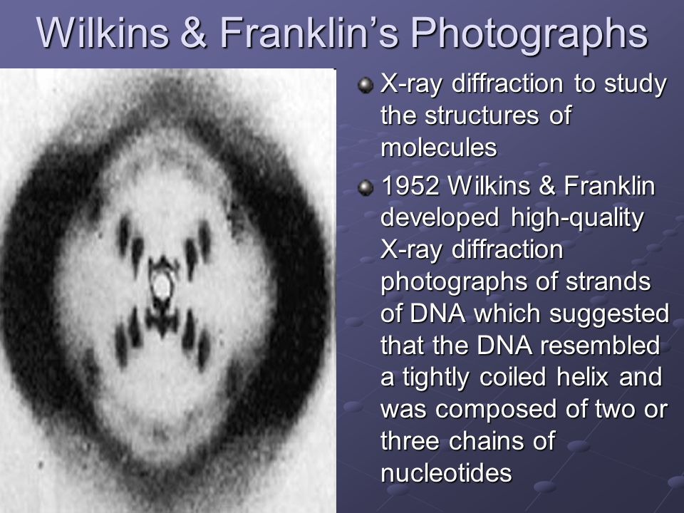 Wilkins & Franklin's Photographs