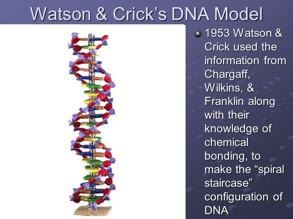 Watson & Crick's DNA Model