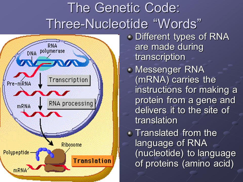 The Genetic Code: Three-Nucleotide Words