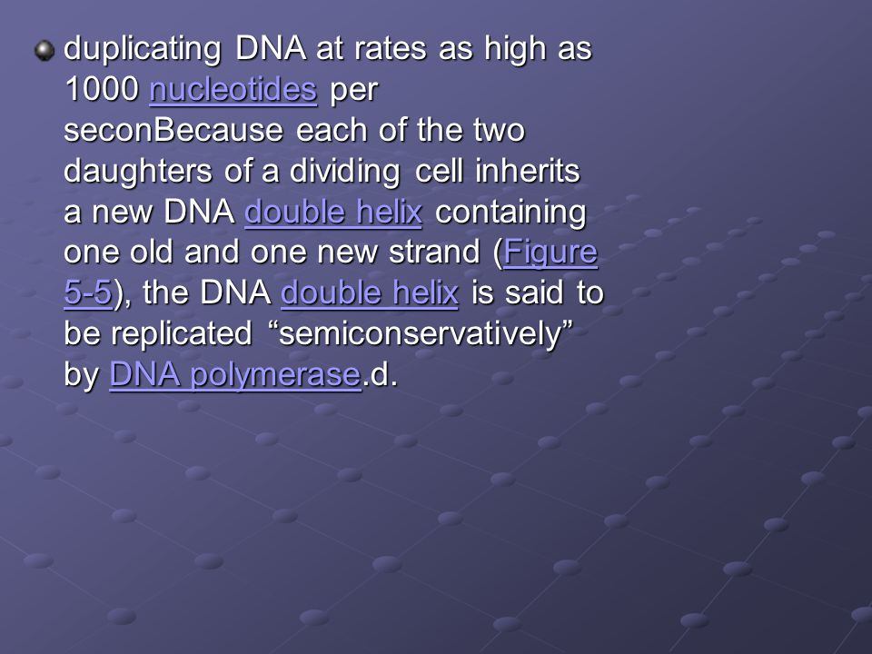 duplicating DNA at rates as high as 1000 nucleotides per seconBecause each of the two daughters of a dividing cell inherits a new DNA double helix containing one old and one new strand (Figure 5-5), the DNA double helix is said to be replicated semiconservatively by DNA polymerase.d.