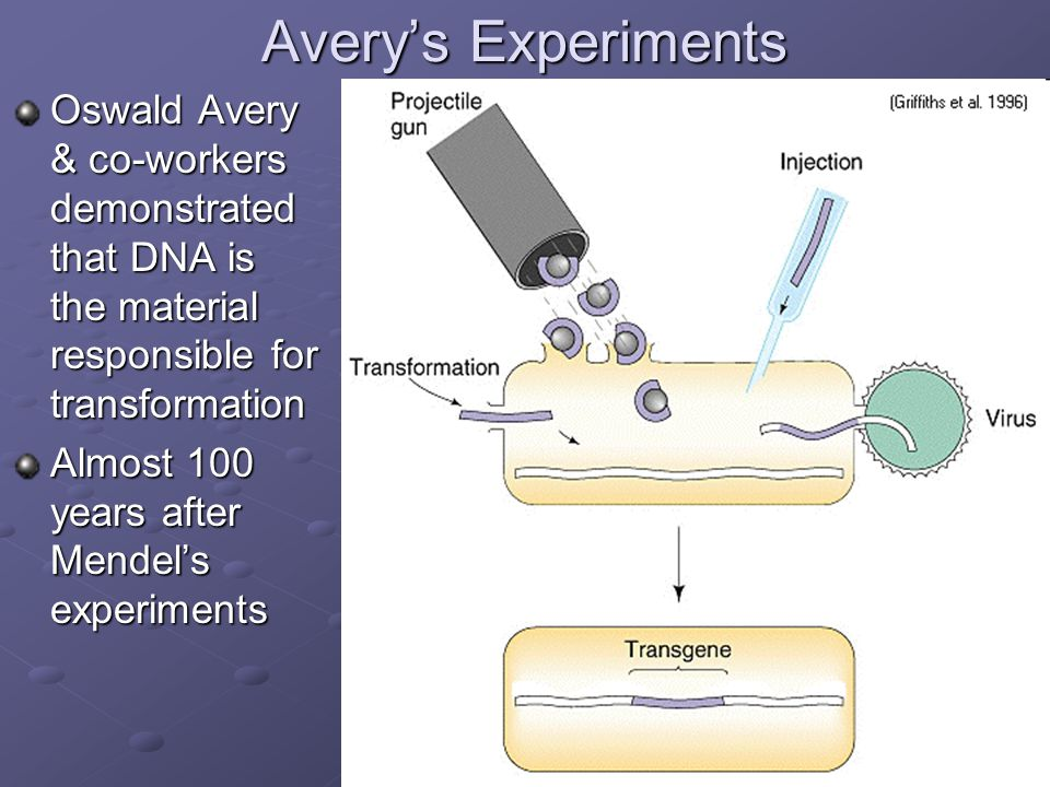 Avery's Experiments Oswald Avery & co-workers demonstrated that DNA is the material responsible for transformation.