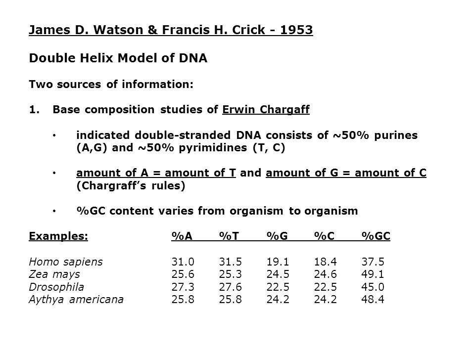 James D. Watson & Francis H. Crick - 1953 Double Helix Model of DNA