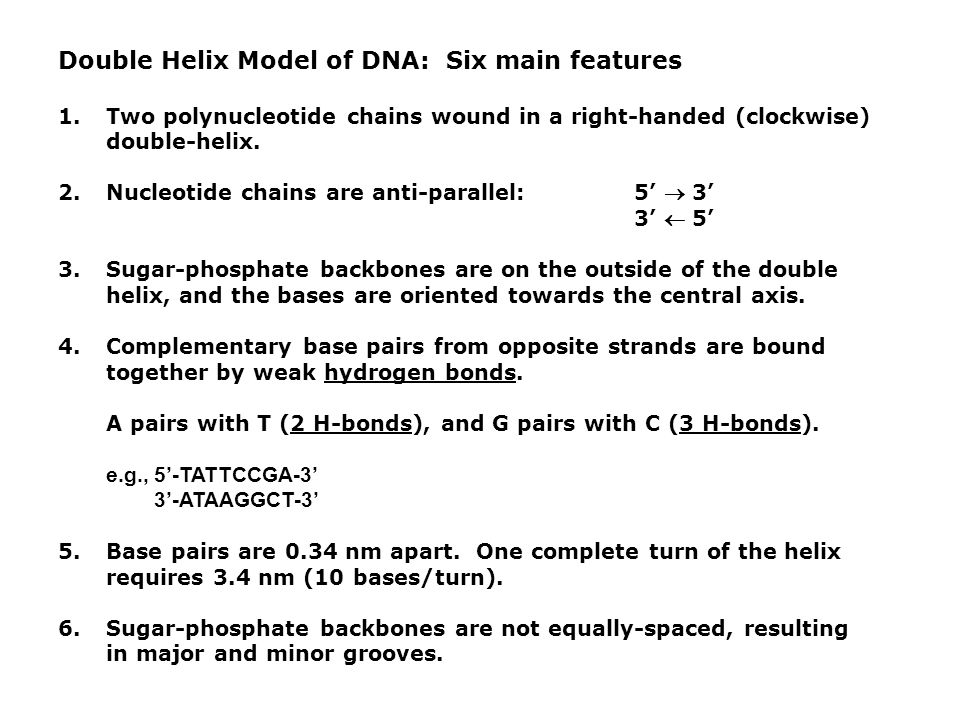 Double Helix Model of DNA: Six main features