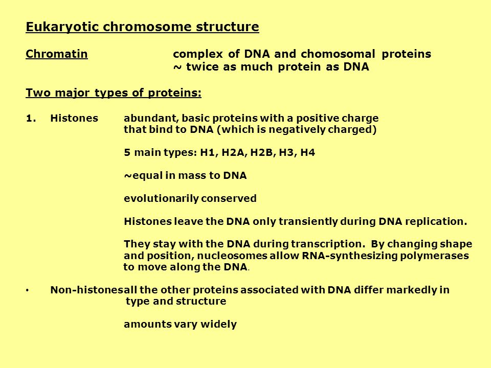 Eukaryotic chromosome structure