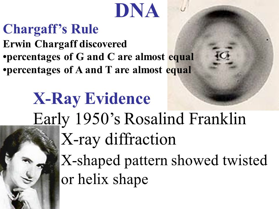 DNA X-Ray Evidence Early 1950's Rosalind Franklin X-ray diffraction