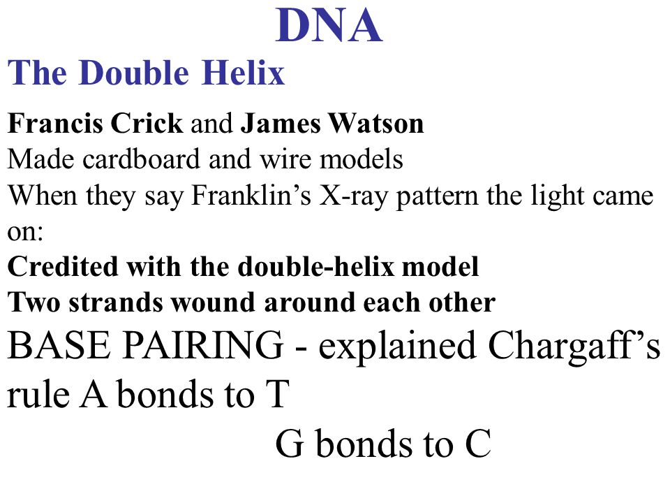 DNA BASE PAIRING - explained Chargaff's rule A bonds to T G bonds to C