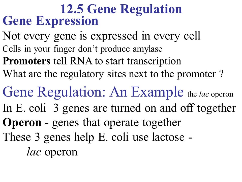 Gene Regulation: An Example the lac operon