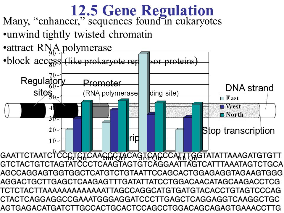 12.5 Gene Regulation Many, enhancer, sequences found in eukaryotes