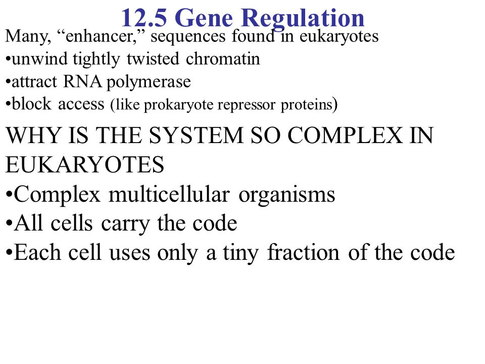 12.5 Gene Regulation WHY IS THE SYSTEM SO COMPLEX IN EUKARYOTES