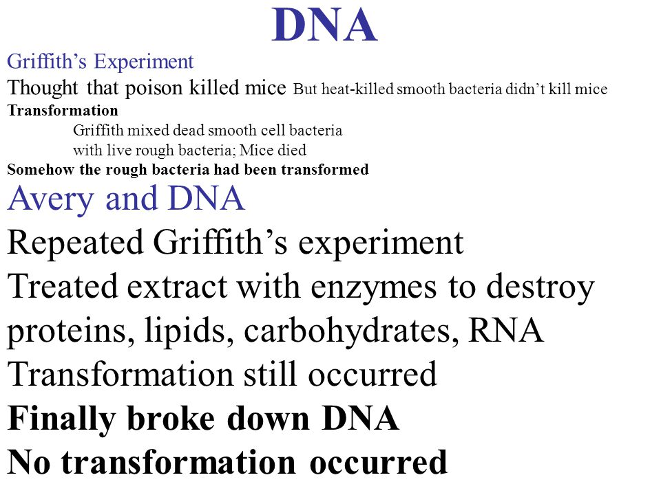 DNA Avery and DNA Repeated Griffith's experiment
