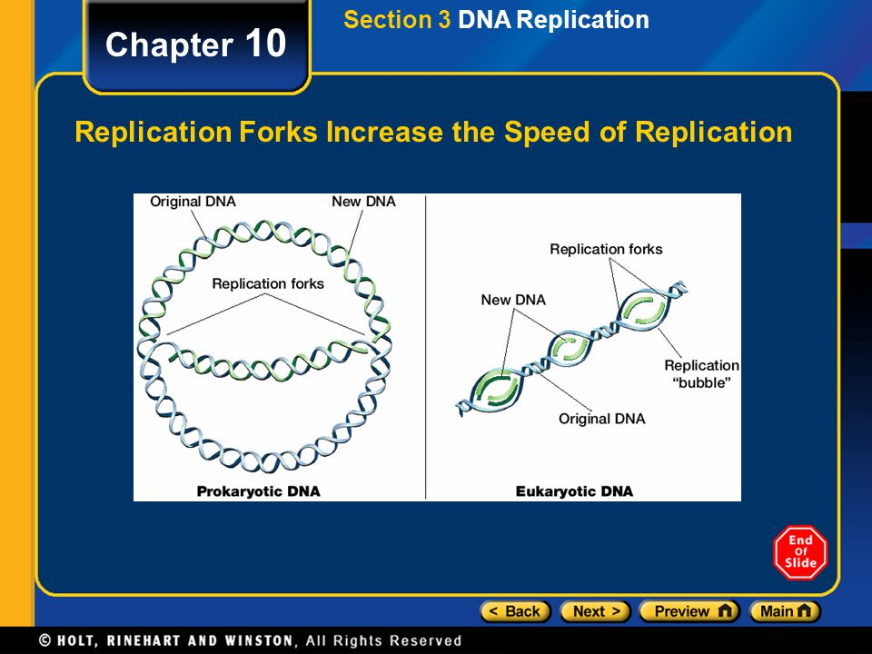 Chapter 10 Replication Forks Increase the Speed of Replication