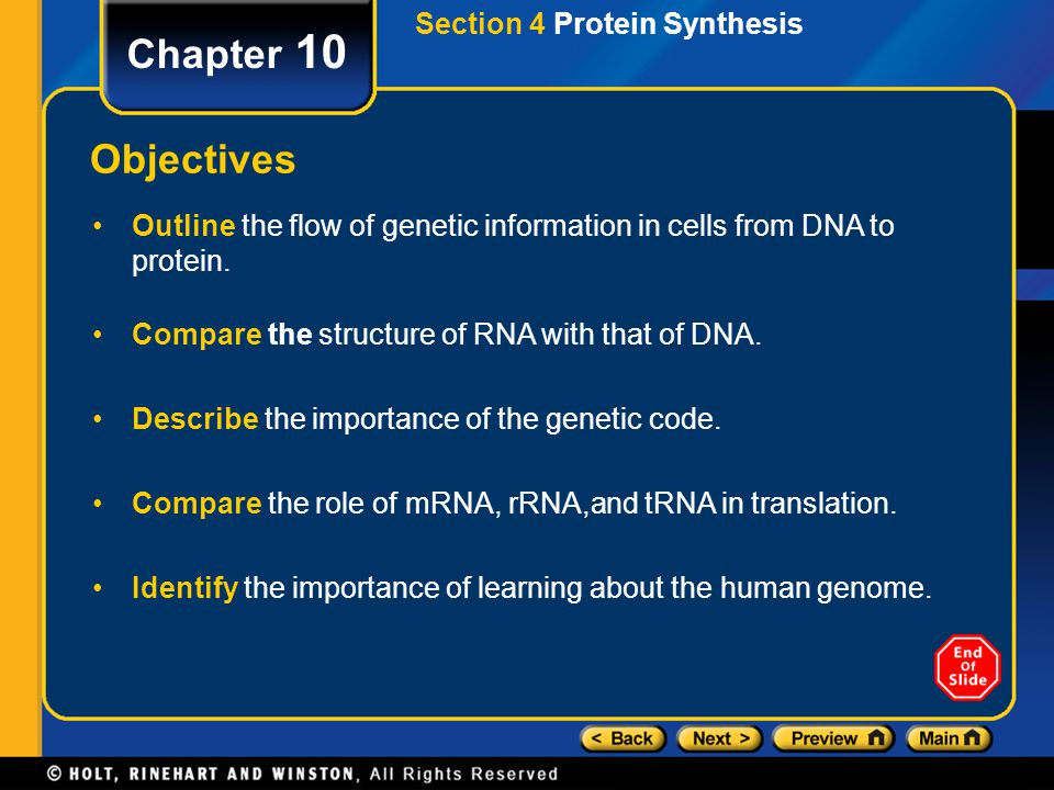 Chapter 10 Objectives Section 4 Protein Synthesis