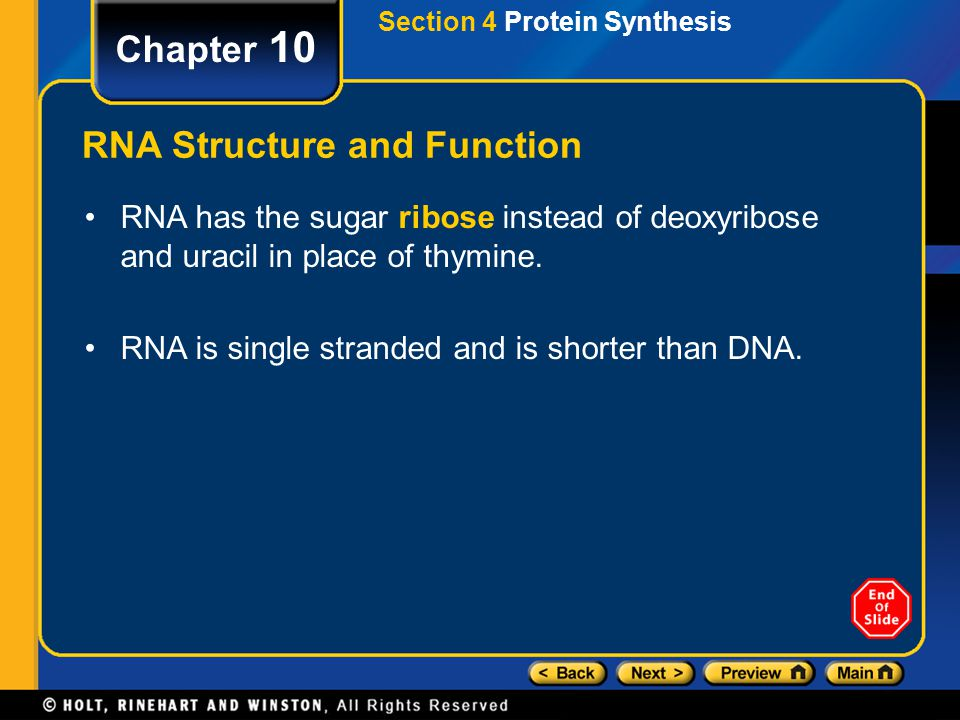 RNA Structure and Function