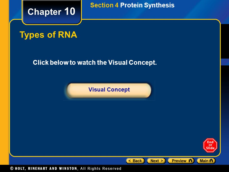 Chapter 10 Types of RNA Section 4 Protein Synthesis
